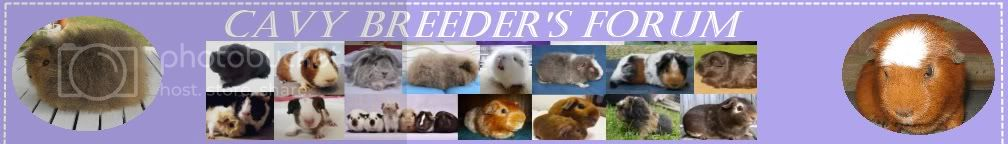 Cavy Breeders